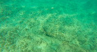 Aruba - Underwater - Picture - 5. Southern Caribbean Cruise - 2019