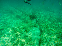 Aruba - Underwater - Picture - 3. Southern Caribbean Cruise - 2017