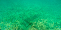 Aruba - Underwater - Picture - 4. Southern Caribbean Cruise - 2016